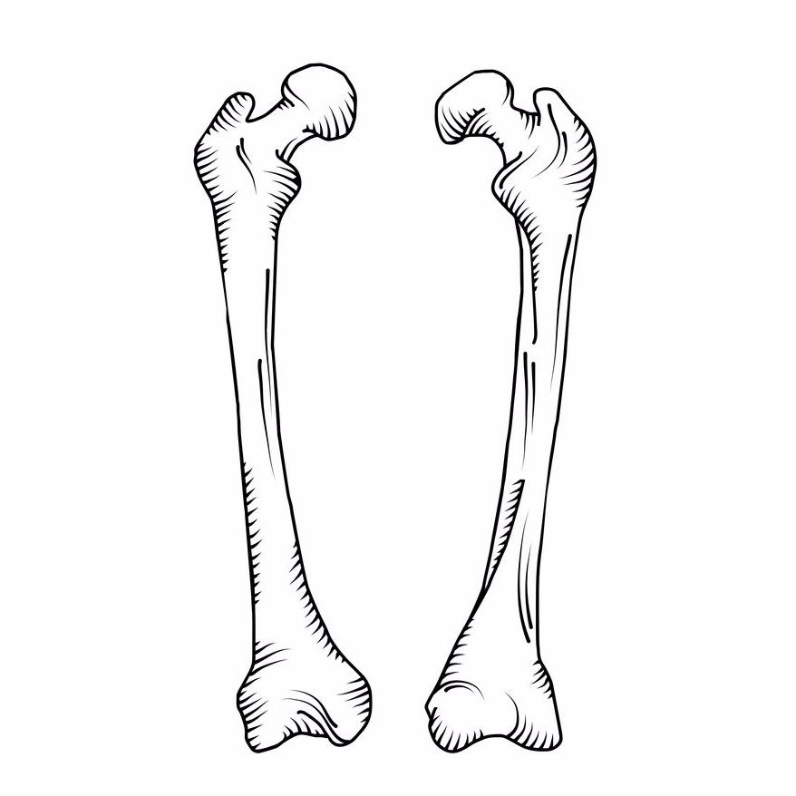 hand-drawn-realistic-human-bones-vector-10282879